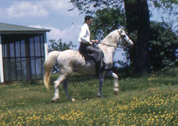 Charles Craver riding *La Tisa at Dr. Greene's farm in Virginia